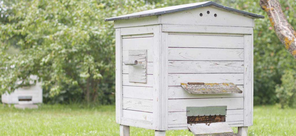 bien choisir une ruche
