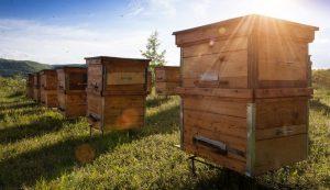 Comment bien choisir une ruche pour abeilles