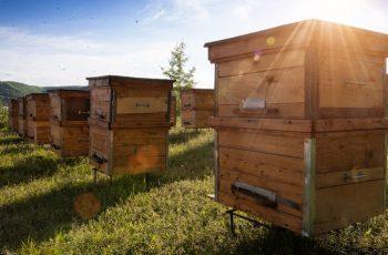 meilleure ruche pour abeilles