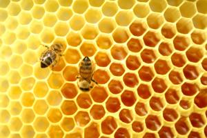 ruche abeille