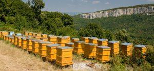 Comment fonctionne une ruche ?
