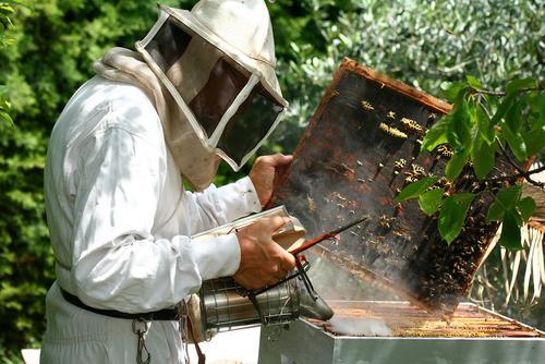 Avec quoi enfumer les abeilles ?