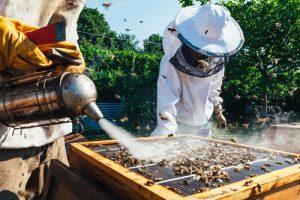Enfumoir apiculture