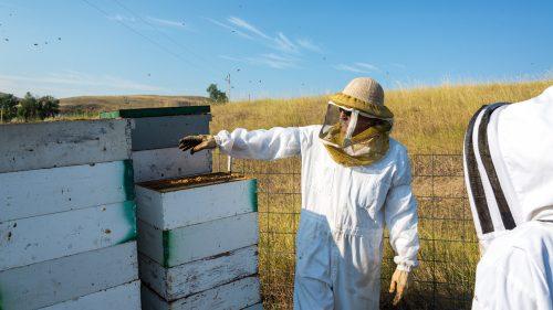 La combinaison d'apiculture